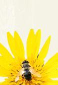m l'abeille