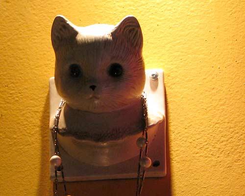 Un chat Perlé!